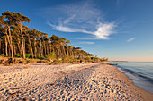 Evening sun on the western side of the Darss peninsula in the Baltic Sea, Mecklenburg-Western Pomerania, Germany, Europe
