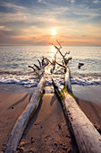 Sunset over driftwood on beach of the Baltic Sea, Mecklenburg-Western Pomerania, Germany, Europe