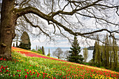 Flower island Mainau, view towards Constance and Switzerland, Konstanz, Lake of Constance, Baden-Wuerttemberg, Germany