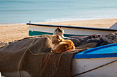 Cats on a fishing boat at the beach of Salema, Parque Natural do Sudoeste Alentejano e Costa Vicentina, Atlantic Ocean, District Faro, Region of Algarve, Portugal, Europe