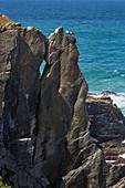 Steep coast and storks at Cabo Sardao near Odemira, Parque Natural do Sudoeste Alentejano e Costa Vicentina, Southwest Alentejo and Vicentine Coast Natural Park, District Beja, Region of Alentejo, Portugal, Europe