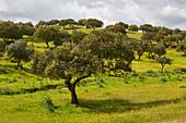 Spring in Alentejo near Serpa, District Beja, Region of Alentejo, Portugal, Europe
