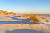 Dunes on the beach on the North Frisian Island Amrum, Nebel, North Sea, Schleswig-Holstein, Northern Germany, Germany, Europe