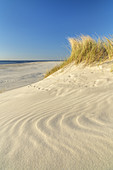 Dune landscape and beach on the North Frisian Island Amrum, Norddorf, North Sea, Schleswig-Holstein, Northern Germany, Germany, Europe