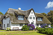 Thatched house in Westerland, North Frisian Island Sylt, North Sea coast, Schleswig-Holstein, Northern Germany, Germany, Europe