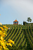 Red vine cottage with vineyard, Immenstaad, Lake Constance, Baden-Württemberg, Germany