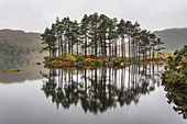 Trees on an island in a lake, Inverpolly Nature Reserve, Highlands, Scotland, UK