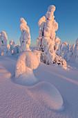 Zugeschneite Bäume im Nationalpark Riisitunturi, Posio, Lappland, Finnland