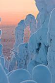 Sonnenuntergang und zugeschneite Bäume im Nationalpark Riisitunturi, Posio, Lappland, Finnland