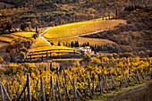 Chianti-Weinberge während des Herbstes, Castellina in Chianti, Provinz Florenz, Toskana, Italien