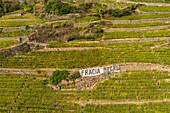 Terraced vineyards, Chiuro, Rhaetian Alps, Sondrio province, Valtellina, Lombardy, Italy