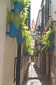 Hanging flowerpots on white walls, Calleja De Las Flores, Cordoba, Andalusia, Spain