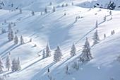 Frozen trees in the snowy landscape, Val Lunga, Tartano Valley, Sondrio province, Valtellina, Lombardy, Italy