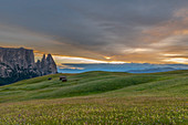 Alpe di Siusi/Seiser Alm, Dolomites, South Tyrol, Italy. Dusk over Alpe di Siusi with the peaks of Sciliar