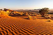 Rote Dünen der ältesten Wüste der Welt, Namib Naukluft National Park, Namibia, Afrika
