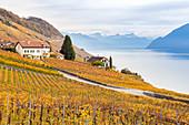 Ansicht der Lavaux Weinberge, die Genfersee im Herbst, UNESCO-Welterbestätte umgeben, Kanton Waadt, Schweiz