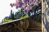 Blühende Glyzinien über die Treppe auf dem Weg zur Kirche Santa Maria del Sasso. Morcote, Kanton Tessin, Schweiz