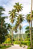 The Union Estate Plantation on La Digue island. La Digue, Seychelles, Africa