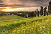 Drastischer Sonnenaufgang über Viale dei Cipressi, Provinz Inverigo, Brianza, Como, Lombardei, Italien, Europa