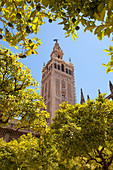La Giralda bell tower from orange court, Seville, province of Seville, Andalusia, Spain