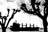 Silhouette of a cargo ship on the Elbe, framed by striking trees, Hamburg, Germany