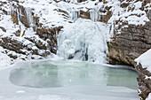 Cow escape waterfalls at Farchant, Werdenfelser Land, Upper Bavaria, Bavaria