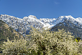 Spring in Eschenlohe in front of the snow-capped mountains of the Estergebirge, Upper Bavaria, Bavaria, Germany