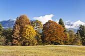 Autumnal mountain forest, Garmisch-Partenkirchen, Werdenfelser Land, Upper Bavaria, Bavaria, Germany
