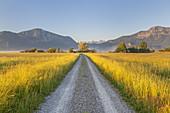 Weg zum Eichsee vor Jochberg und Herzogstand, Großweil, Oberbayern, Bayern, Deutschland
