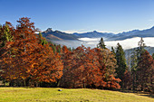 View from the Mitter hut on the Gerstenrieder head to the Tegernsee mountains with Ross and Buchstein, Lenggries, Upper Bavaria, Bavaria, Germany,