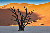 Sunrise in the Namib Rand Nature Reserve, Namib Naukluft Park, Namibia