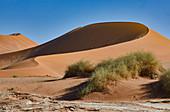 Dünen in der Wüste Namib, Namib Naukluft Park, Namibia
