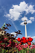 The Fernsehturm Alex with blooming tulips in spring, Berlin, Germany