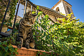 Domestic cat lurks in front of a country house in Oppedette, Provence