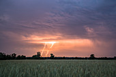 Lightnings in the sky over the Spreewald, Brandenburg
