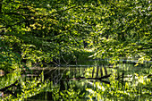 In the UNESCO Biosphere Reserve Spreewald, the trees of the mixed forests are reflected in the water