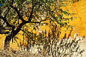 Tree in front of yellow house wall at Douro, northern Portugal, Portugal