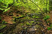 Im Silberbachtal, Teutoburg Forest, North Rhine-Westphalia, Germany