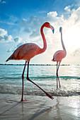 Aruba, flamingobeach