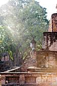 Licht auf Buddhastatue im Park des Tempels Wat Mahathat, alte Königsstadt, Sukhothai, Thailand