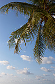 Coconut tree against blue sky, A Na Lay Resort, Koh Kood, Koh Kut, Trat, Thailand