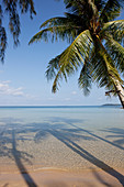 Palm trees, tropical dream beach, A Na Lay Resort, Koh Kood, Koh Kut, Trat, Thailand
