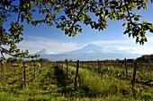 Der Berg Ararat mit Weinfeld bei Chor Wirap, Armenien, Asien