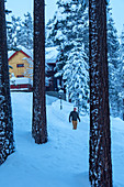 Norway, winter,  Heggenes,surroundings Hotel Herangtunet, forrest, pine trees, walking person
