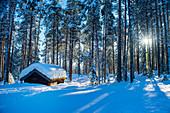 Winterlicher Pinienwald mit Holzhütte bei Sonnenschein, Heggenes, Norwegen