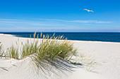 Strand am Ellenbogen, Sylt, North Sea, Schleswig-Holstein, Germany