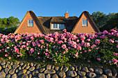 Flower arrangements at Friesenhäusern, Keitum, Sylt, North Sea, Schleswig-Holstein, Germany