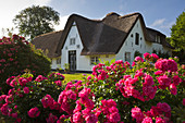 Flower arrangement at the thatched Friesenhaus, Keitum, Sylt, North Sea, Schleswig-Holstein, Germany