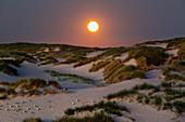 Full moon, seagulls sleeping in the dunes, Amrum, North Sea, Schleswig-Holstein, Germany