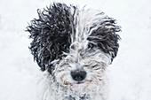 Close up portrait cute dog in snow